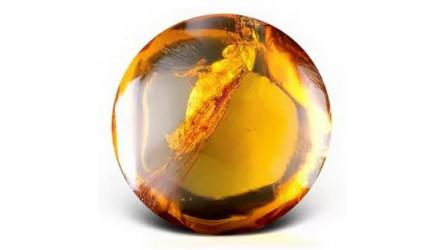 Эфирное масло янтаря